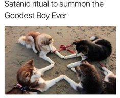 Goodest boy