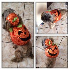 Shorkie Talk - My little pumpkin :)