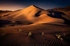 2 Plants (Death Valley, California) by Greg Boratyn - 500px
