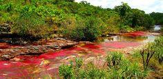Paisajes coloridos Rio Caño Cristales, Colombia