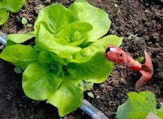 Soluţie 100% eco împotriva manei | Paradis Verde The 100, Vegetables, Green, Vegetable Recipes, Veggies