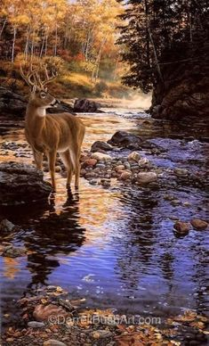 Wildlife Paintings, Wildlife Art, Animal Paintings, Landscape Paintings, Deer Photos, Deer Pictures, Nature Pictures, Foto Picture, Image Nature