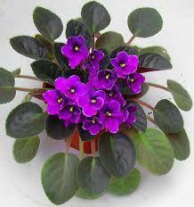 Resultado de imagem para flores sao lindas