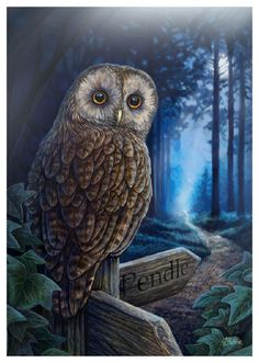 Fantasy Gothic Art Canvas Wall Plaque~Way of the Witch~by Lisa Parker~uk seller for Like the Fantasy Gothic Art Canvas Wall Plaque~Way of the Witch~by Lisa Parker~uk seller? Owl Pictures, Canvas Pictures, Wiccan, Magick, Buho Tattoo, Lisa Parker, Owl Artwork, Witch Art, Mundo Animal