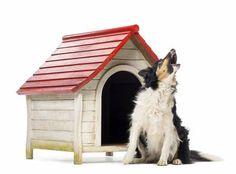 PEDRO HITOMI OSERA: Problemas com animais do vizinho? Saiba o que faze...