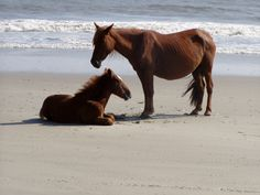 Jeryl Bauman took this excellent photo of two Corolla Wild Horses.