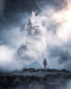 Wolf Images, Wolf Photos, Wolf Pictures, Beautiful Wolves, Animals Beautiful, Wolves In Love, Image Lion, Giant Animals, Wolf Life