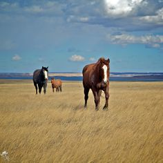 #Ranch Work Presents A #Horse Training Opportunity .:: CavvySavvy.com - We Know Working Horses