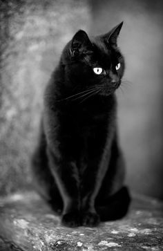 Black Cat, Bright Eyes, Just Waiting ....
