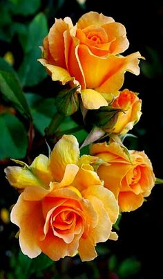 http://catelliyafloristkaranganyar.blogspot.co.id/p/toko-bunga-karanganyar-toko-bunga-kami.html