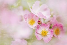 Summer Roses by Jacky Parker on 500px