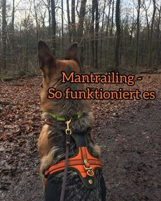 Mantrailing – This is how the popular dog sport works – It does not do anything – Funny Dogs Funny Animal Videos, Videos Funny, Funny Dogs, Cute Dogs, Animals And Pets, Funny Animals, Dog Information, Funny Animal Photos, Dog Training