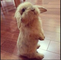 I would love to have a sweet bunny.