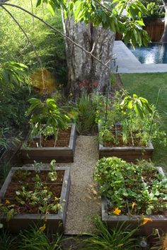 Raised planting beds with pea gravel between