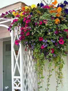 Gorgeous hanging basket of flowers.