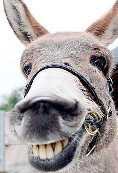 gYH4 JOHN MCLAREN: How extraordinary it is that the pretty little donkey I first saw cowering at the back of a market pen, and saved from slaughter, is now an establ