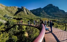 Image 19 of 31 from gallery of Kirstenbosch Centenary tree canopy walkway / Mark Thomas Architects. Photograph by Adam Harrower Mark Thomas, National Botanical Gardens, Most Beautiful Gardens, Beautiful Places, Cape Town South Africa, Tree Canopy, Tropical Landscaping, Garden Trees, Natural