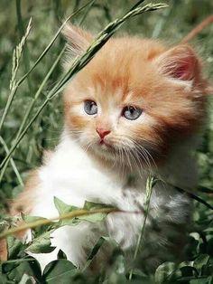 Soft kitty....