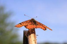 Butterfly resting on a Plant, against Blue Sky - Public Domain Photos, Free Images for Commercial Use Free Photography, Animals Of The World, Public Domain, Far Away, Moth, Free Images, Insects, Butterfly, Sky