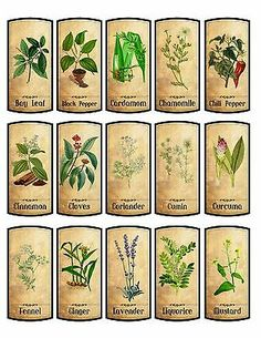 Details about 30 spice labels glossy laminated adhesive : Vintage Labels 15 Spice ? Spice Jar Labels, Pantry Labels, Spice Jars, Herb Labels, Book Labels, Vintage Labels, Vintage Posters, Vintage Ephemera, Printable Labels