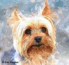 Custom Pet Portraits Original Watercolor Dog Portraits By - Custom Pet Portraits Custom Pet Portraits Personalized Watercolor Portraits Custom Dog Cat And Other Animals Portraits From Your Photo If You Want Me To Make A Custom Pet Portrait For You Buy Yorkies, Yorkie Dogs, Yorkshire Terrier, Watercolor Cat, Watercolor Portraits, Watercolor Trees, Watercolor Landscape, Custom Dog Portraits, Pet Portraits