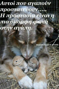 Greek Quotes, Animal Kingdom, Picture Quotes, Me Quotes, Cute Animals, Letters, Thoughts, Pictures, Photos