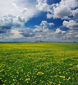 *Country meadow