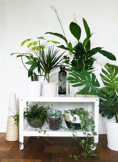 Decorating Drama: 10 Really Big Plants You Can Grow Indoors | Big ...