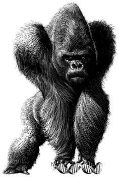 Gorilla - Ricardo Martinez