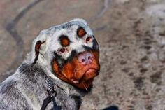 5 Pets With Extremely Strange Fur