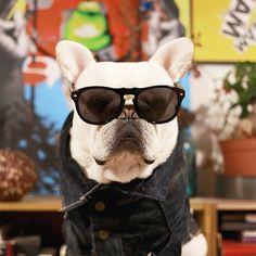 ブル男は10/29で2歳になりました。ありがとうございます。 Bullo became 2years old today. #フレンチブルドッグ #フレブル #フレンチブル #frenchbulldog #frenchie #instafrenchie #doglover #bully #BullyInstaFeature #birthday #2yearsold #happybirthday