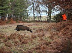 #hunt #hunting #chasse #instachasse #wildboar #wildboarhunting #instahunt #jagd #caza #wildschwein #huntinglife #vildsvin #jakt #jeger #boar #huntingday #caccia #jagt #boar #cinghiale #jabali #jabalí #härkila #hoghunting #sanglier #sako #pighunting #schwarzwild by instachasse