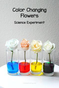 Color Changing Flowers #ScienceExperiment #PlantExperiment