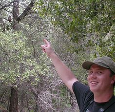 When in Southern Arizona...Birding is very popular during the spring and fall migrations with over 300 species. Give Richard Fray a call for a private and fun guided tour! www.funbirdingtours.com with www.arizonasunshinetours.com