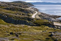 National Tourist Route Havøysund (Norway) takes you to the High North. The route follows the Arctic Ocean and meanders through a rugged landscape of cliffs and untamed nature where the bare mountains touch the oceans edge.