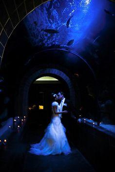 276 Best Aquarium Wedding Images Little Mermaid Parties Wedding