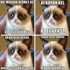 """Képtalálat a következőre: """"grumpy cat magyarul felirattal"""" Grumpy Cat Quotes, Funny Grumpy Cat Memes, Cat Qoutes, Funny Humor, Animal Jokes, Funny Animal Memes, Funny Animals, Geek Humor, Mom Humor"""