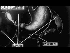 How the Fires of Our Body Are Fed: A Study of the Human Digestive Process 1926: http://youtu.be/bCkW3ZHyr-0 #digestion #anatomy #physiology