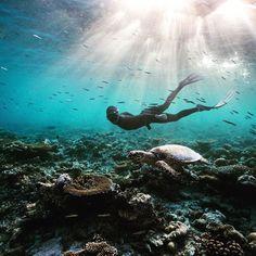Free-diving Maldives Serbest dalış Maldivler Maldivler'de yapacağınız tatilde dünyaca ünlü serbest dalış organizasyonu Apnea Total'in serbest dalış eğitimlerine katılabilir bambaşka bir dünyayı eğlenerek keşfedebilirsiniz daha fazlası için ; http://ift.tt/24DfL17 #maldives #maldivesislands #maldivler #dalis #serbestdalis #freediving #apneatotal #diving #sea #deniz #sealife #instadaily #uniquetravel #luxurytravel #travelling #travelingram #tatil #gezi #seyahat #holiday #freedom #ozgurluk…