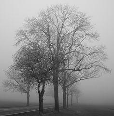 morning fog Mists, Snow, Photos, Outdoor, Outdoors, Outdoor Living, Garden, Eyes, Cake Smash Pictures