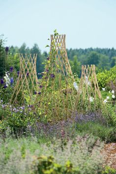 Expandable Willow Trellises from Gardener's Supply, available in 3 sizes