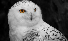 31 Awe Inspiring Bird Photos - http://www.theenvironmentalblog.org/2012/09/awe-inspiring-bird-photos/