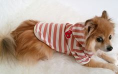 Handmade Peach stripe Hoodie, Pull-over Dog hoodie, Cute Dog clothes, Pet clothes, Fashion for dogs and puppies by puppydoggyclothes on Etsy