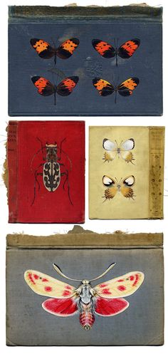 Bugs on Books by Rose Sanderson    http://www.rosesanderson.com/