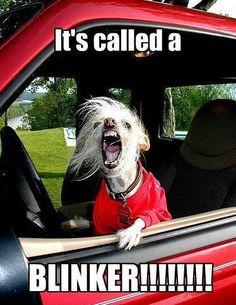 """""""It's called a blinker!!!"""