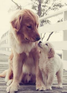 Rucksack GYM Bag Turnbeutel Leinentasche Australian Shepherd Dogs Hunde Rasse