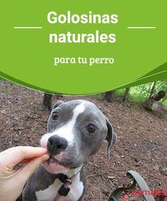Golosinas naturales para tu perro - Mis animales  ¡No le des azúcar! Siempre decimos esa frase a quienes han querido dar algo dulce a nuestro perro. Te enumeramos golosinas naturales para tu perro.