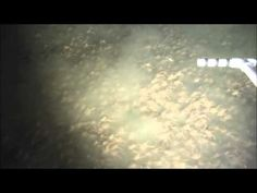Researchers Captured Footage Of An Insane Amount Of Crabs Near Panama