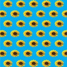 6130 Yellow Daisy Pattern Backdrop
