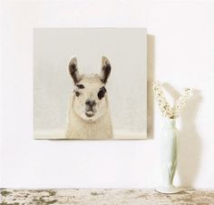 Valentine Llama Art Fine Art Photography by lucysnowephotography, $20.00